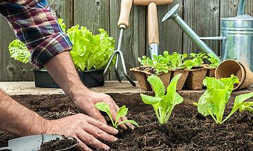 szkółki ogrodnicze dolnośląskie