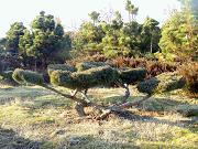 duze drzewa (0)