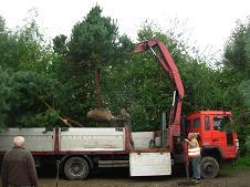 duze drzewa (2)