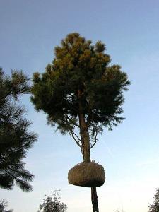 duze drzewa (3)