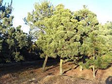 duze drzewa